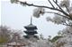 京都 桜 仁和寺